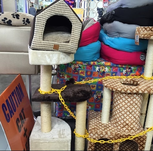 accessories,for,dogs,and,cats