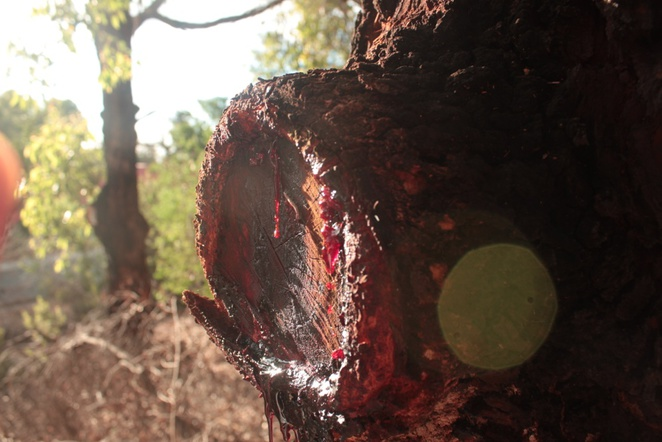 colourful bright red sap dripping and bokeh (for all you photography hobbyists out there)!