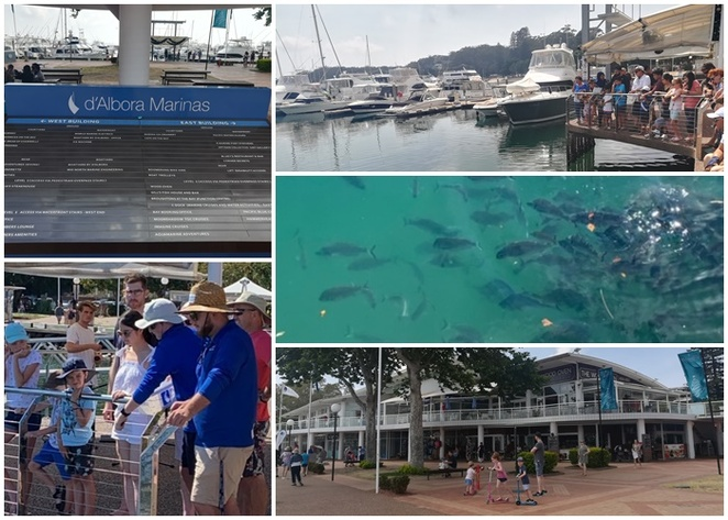 fish feeding, d'albora marinas, nelson bay, port stephens, NSW, whats on, daily fish feeding, kids, children, school holidays, things to do, free, nelson bay, port stephens, NSW,
