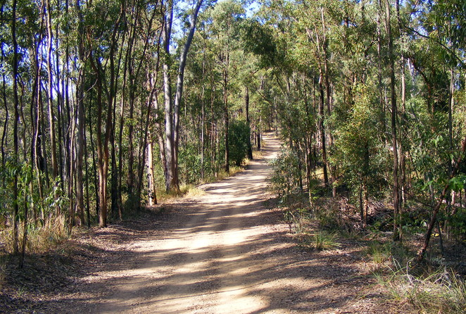 The Powerful Owl Trail is an easy and well maintained trail at the top