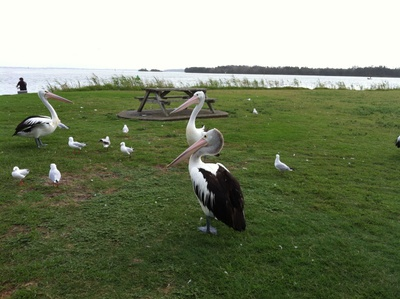 Picnic Point Reserve