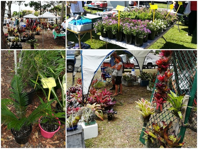 plants, where to buy plants, trees, fruit trees, medowie markets, fly point markets, tomaree markets, trees, cheap plants, nelson bay, port stephens, NSW,