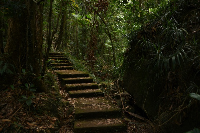 Stairs steps Kondalilla falls Sunshine coast hinterland