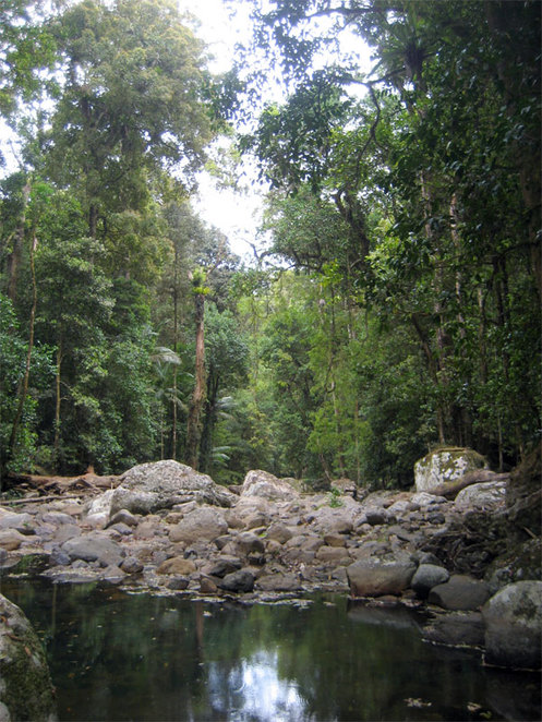 The Meeting of the Waters on the Warrie Circuit at Springbrook National Park