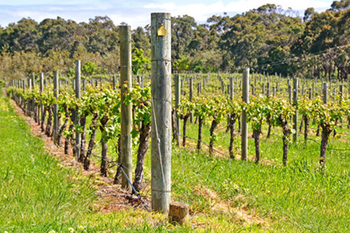 Victoria Macedon Ranges Wine Wineries Day Out Escape The City Budburst Festival