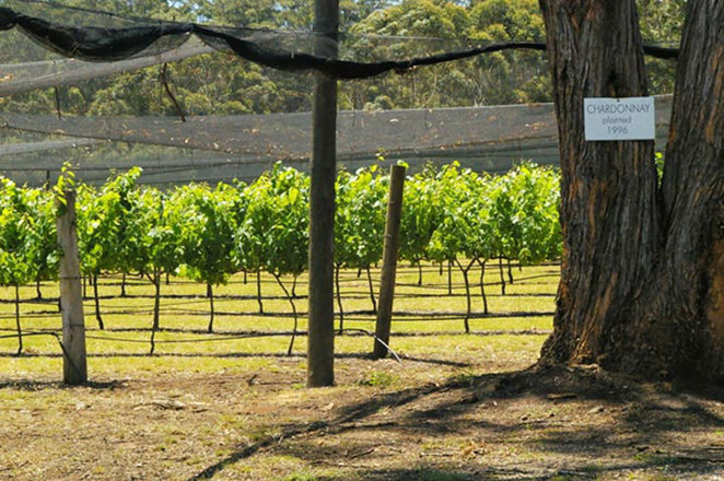 Vineyards, winery, Port Macquarie, gardens, nature