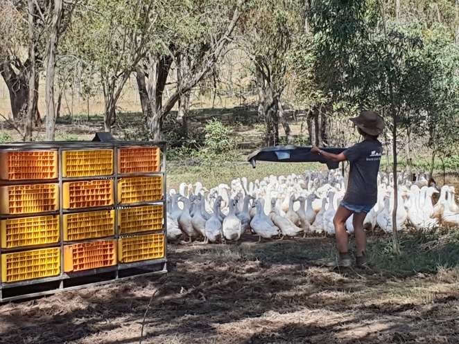 Tathra Place Free Range Ducks