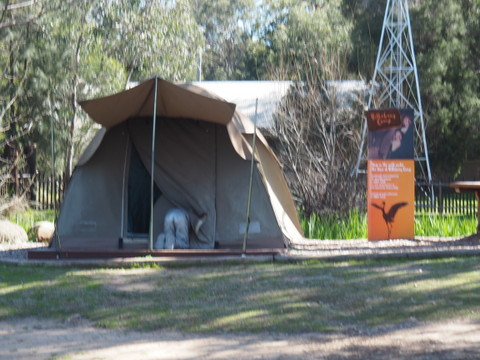Camping at Dubbo Zoo,