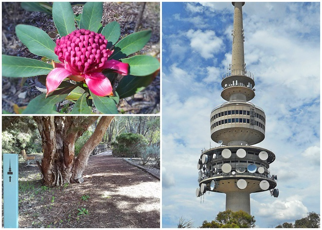 flower to tower, australian national botanical gardens, canberra, ACT, bushwalks, walks, uphill walks, frith road, acton, actewAGL sub station, telstra tower,