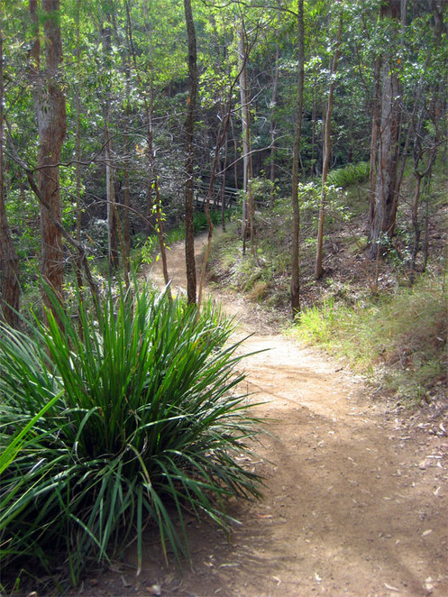 My favourite way up Mt Coot-tha is the Honeyeater Track