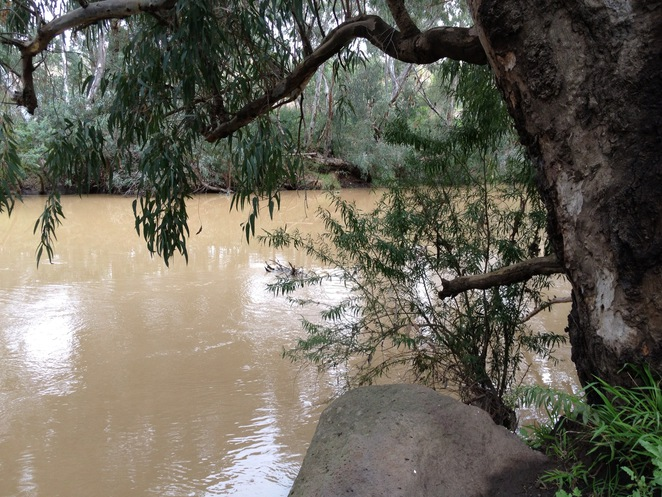 Marybynong River, The Reflection of Nature, Brimbank Park, Brimbank Park Nature Trail, The Heart Foundation, Green Walks, Victoria Walks, Parks Victoria, Great Places to Walk, Michellina van Loder, Frogs, Leaping Lizard Cafe, Urban Wildlife