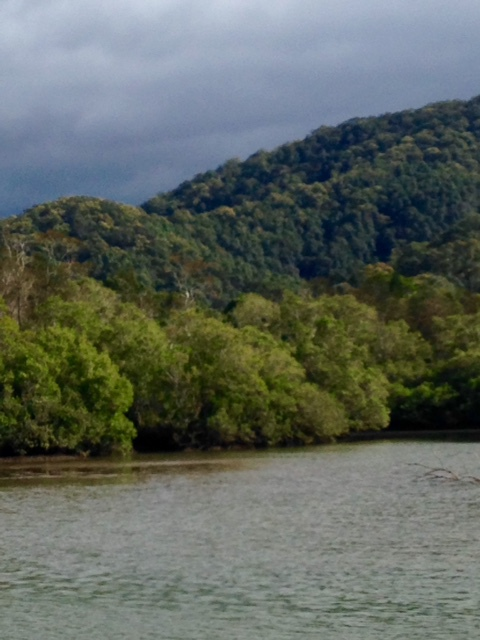 Mount Warning Tours, Spirit of Wollumbin, Eco-Tours, Tweed River, Tumbulgum, BEATS winner for tourism excellence, cruises, boat rides, rainforest, bird watching, hire, kayaks, SUP, history of Tweed, information on Tweed Valley, ferry, Murwillumbah, Heritage Trail, Rous River,
