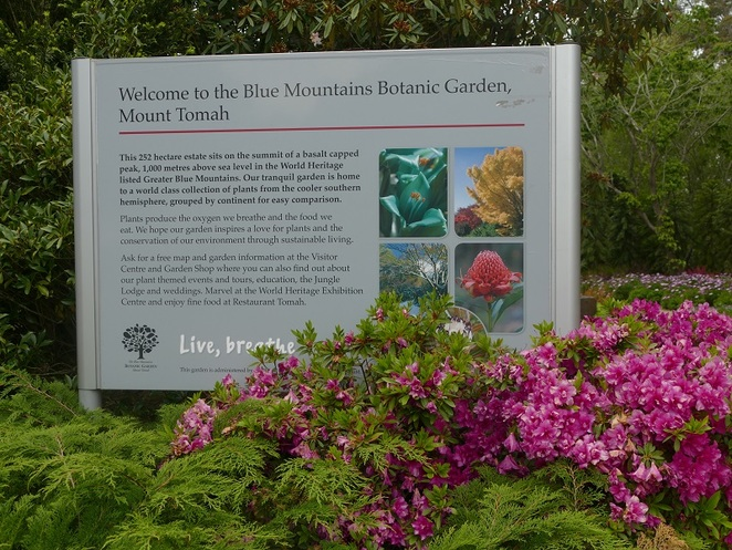 Mt Tomah Botanic Garden Bells Line of Road Blue Mountains