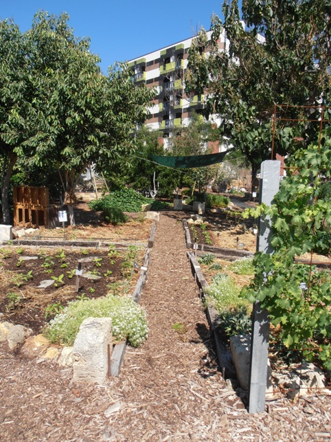 Perth City Farm is a lush oasis amidst the urban landscape.