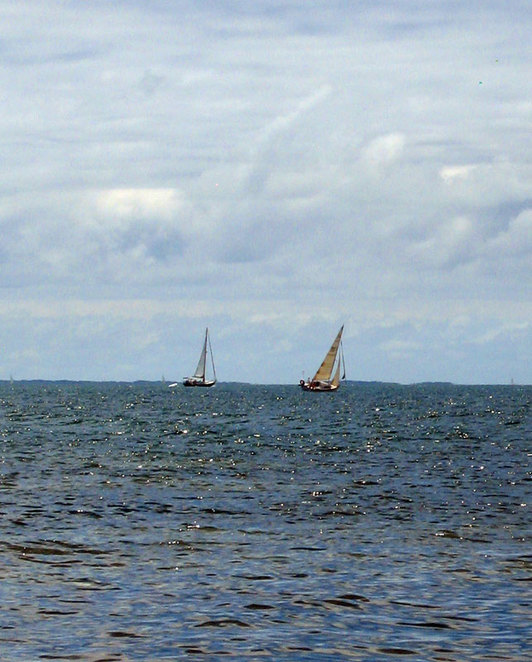 Take the chance to sail for free on Moreton Bay