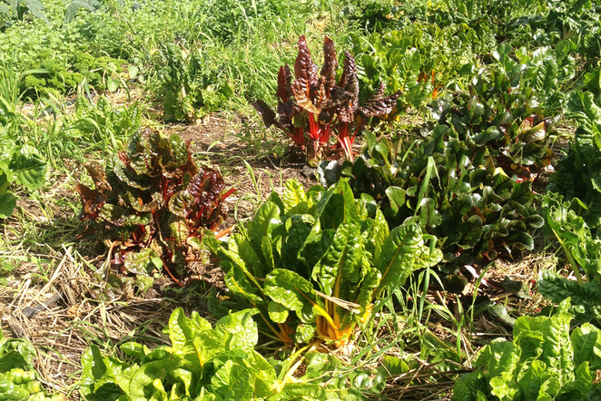 The food forest, permaculture, sustainable agriculture, grow your own vegetables, organic food