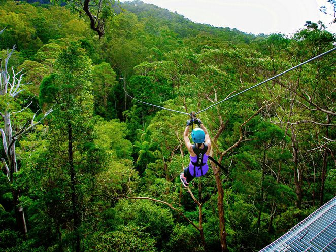 thunderbird park, adventure, treetop challange, ropes course, gold coast, mount tambourne