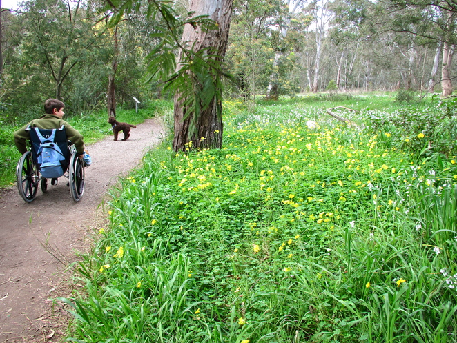 wheelchairs, bushwalking, yarra river