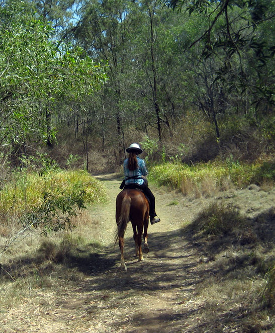 Horse rider on the trail