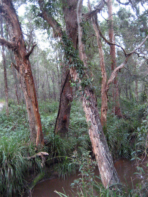 The Koala Bushlands is a very pleasant place to go for a walk