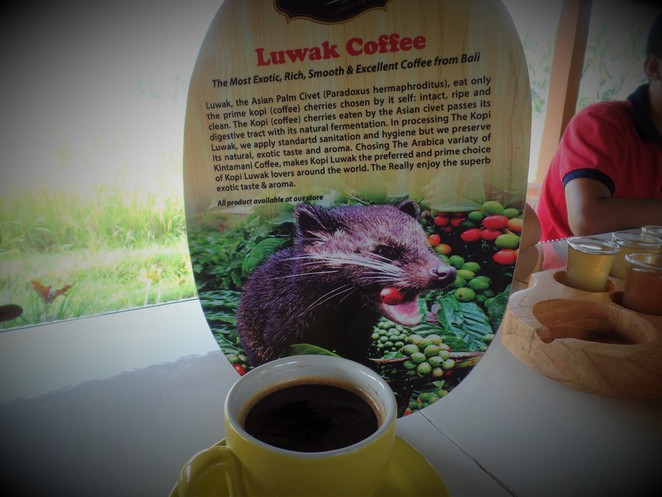 kopi luwak at Lumbung Sari House of Coffee in ubud bali