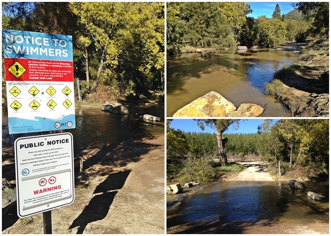 murrays corner, dog friendly, murrumbidgee river, swimming for dogs, where can dogs swim in river, off leash areas, on leash areas, river swimming, dogs,