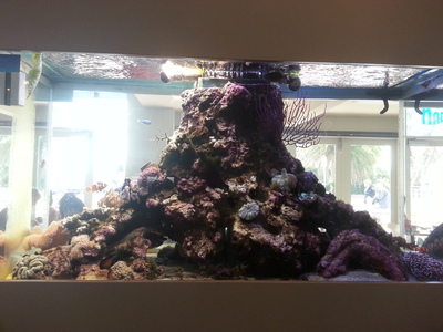 north point cafe, brighton, fish tank