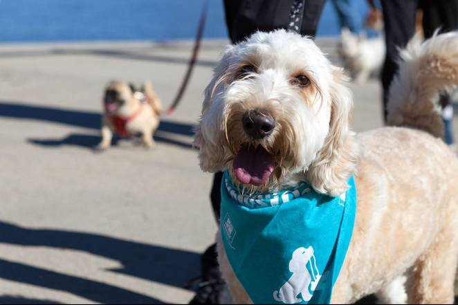 rspca, million paws walk, canberra, ACT, events for dogs, whats on, dog friendly events in canberra, whats on, ACT events for dogs, charity walks, lake burley griffin,