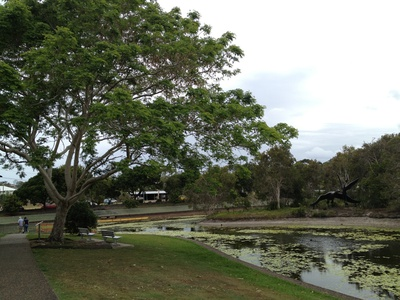 Sit under the trees and relax in Nelson Park at Alexandra Headland