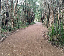Six hidden jewels on the sunshine coast, natural fauna and flora, walks, trails, picnicking, family outdoor fun, barbecues, waterfalls, lakes, Glasshouse Mountain views, stunning scenery