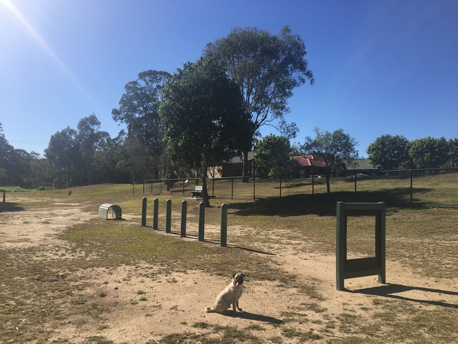 turquoise place park, wavell heights, park, dog park, off leash dog park, off leash dog area, brisbane, northern suburbs, northside, agility equipment, creek, graffiti, street art, nature, walk, dog walk, picnic spot, playground, bush walk, dog friendly