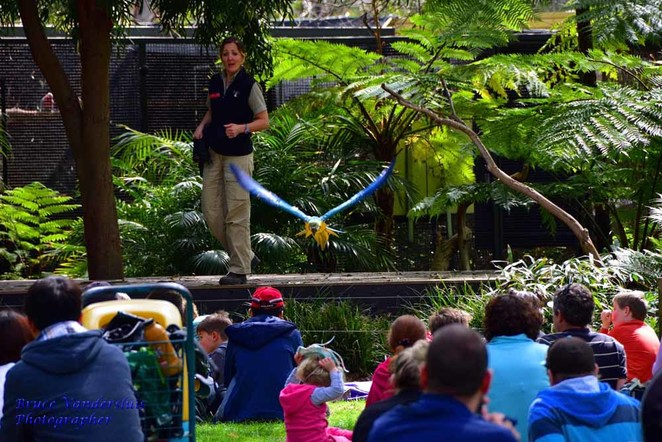 zoocation care, Adelaide zoo, school holidays, zoo foods, meet the keeper, animals, Sumatran tigers, lion, panda