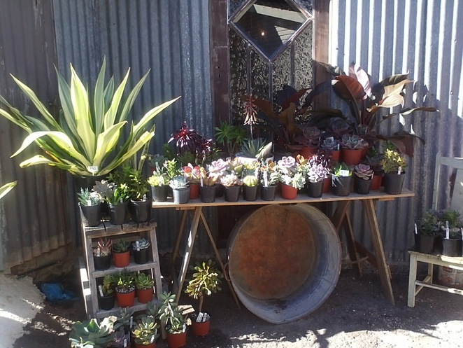 Bromiliads, Succulents, Artisan, giftware, antiques