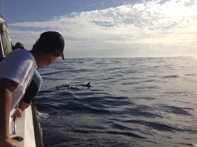 Dive Forster, swim with dolphins, dolphin experience