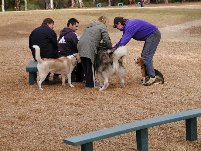 dog park, adelaide, dogs, off leash, exercise areas, park, socialising dogs, pooch park