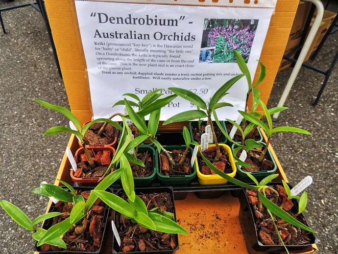 farmers markets, food markets, organic food, market in adelaide, growers market, urrbrae barn market, urrbrae agricultural high, market stalls, australian orchids, garden plants