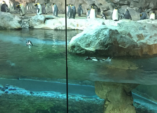 Jurong Bird Park, penguins
