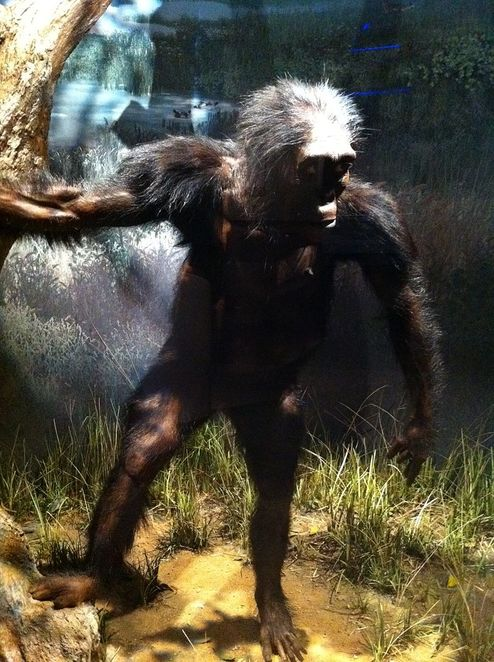 Lucy, Austrolopithicus, hominid, All our Uncles are Monkeys Day, Evolution Day, holidays in November, evolution
