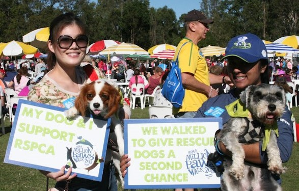 million paws walk, rspca, charity, walk, dogs, pets,