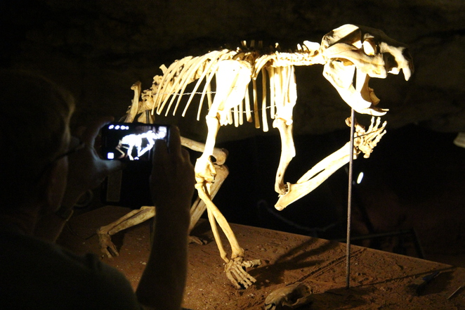 Naracoorte Fossil Caves a surprising gem