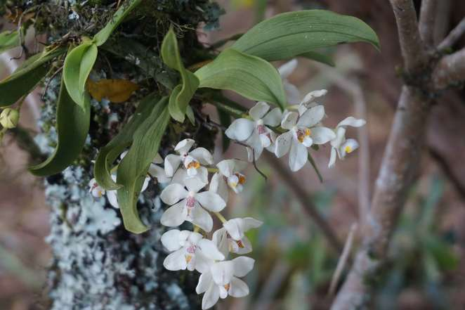 Orchids and lichen