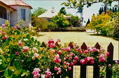 Spring gardens in the Blue Mountains