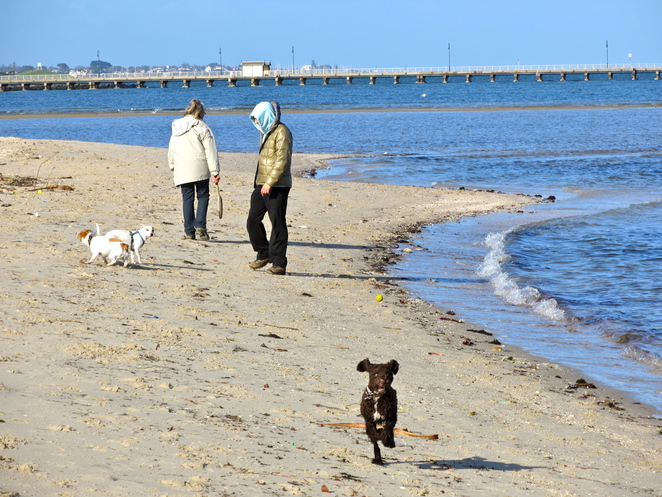 St Kilda west beach, dogs off lead, dogs, walks, beaches