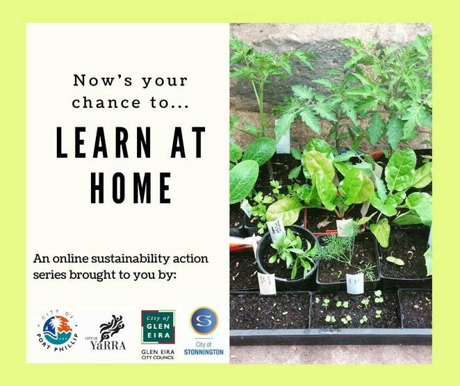 sustainable living series 2020, propagate plants with kat lavers, free gardening webinar, sustainable port phillip, city of port phillip, community event, fun things to do, family fun, online gardening event 2020, covid-19, coronavirus, love your soil with kat lavers 2020, microbes fungi, invertebrates, gardening workshop, grow a garden for wildlife, stonnington city council, food sources