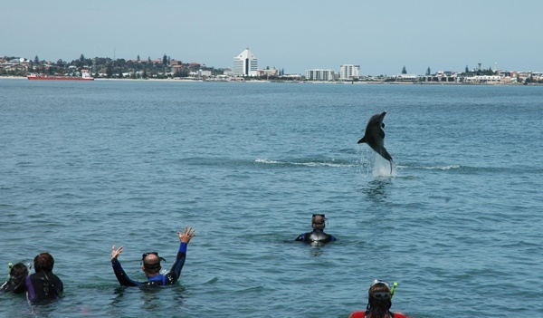 Swim,with,dolphins,bunbury