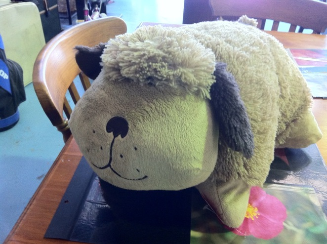 toy, pillow pet, cuddly, cheap toy, toys for kids, girls, boys, toys, angel