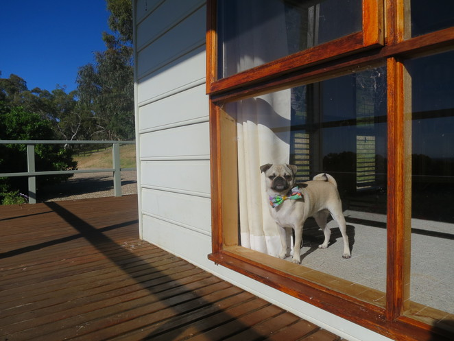 warby cottage, wangaratta, melbourne, nsw vic border, air bnb, motel, hotel, cottage, accomodation, dog friendly, big property, country, retreat, australia, travel, escape, relax, hume highway