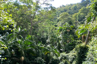 View of the rainforest canopy