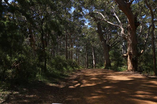 William Bay National Park, tree covered road, Greens Pool, Great Southern, South West, Western Australia, Karri Forest, Greens Pool