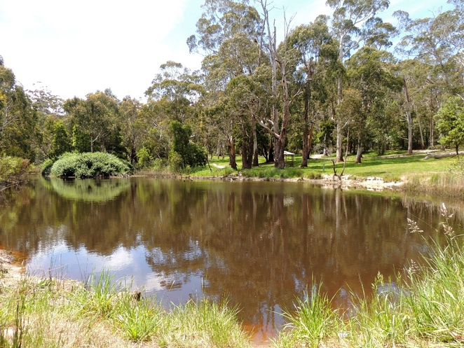 adelaide, park, conservation park, trail, dogs, adelaide hills, creek, free, mount george, dam